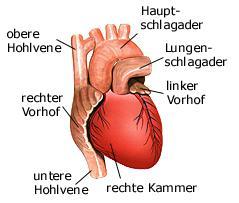 Mensch Herz